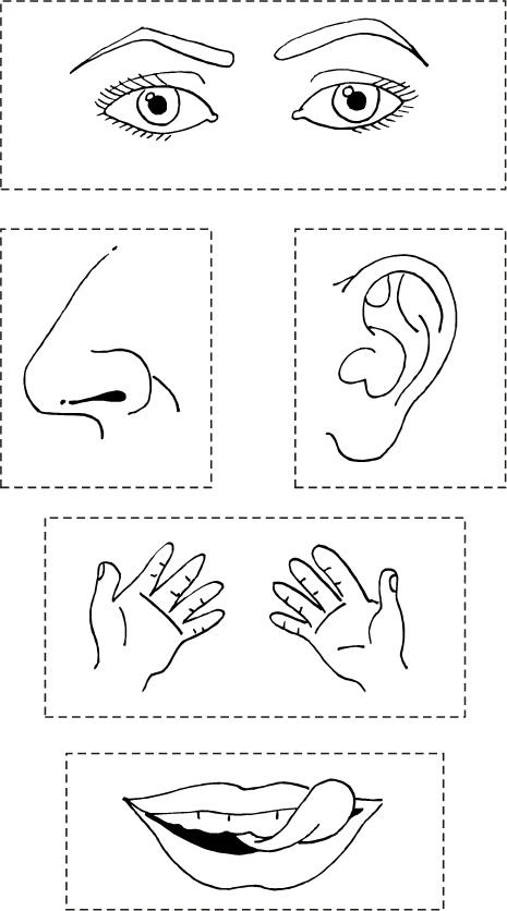 Dibujos de los cinco sentidos para colorear