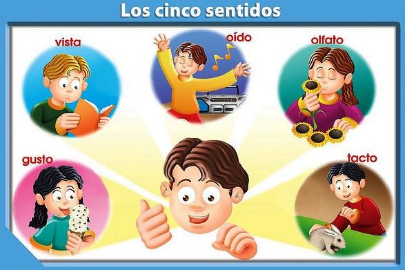 ¿Cómo enseñar los cinco sentidos a niños de primaria?