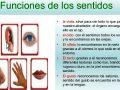Funciones de cada uno de los cinco sentidos