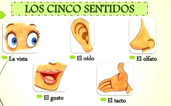 Imágenes de los cinco sentidos parra niños