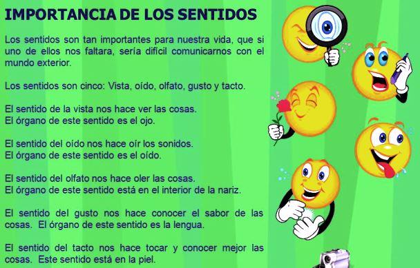 Importancia de los 5 sentidos para niños