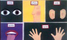 ¿Cómo hacer una maqueta de los cinco sentidos?