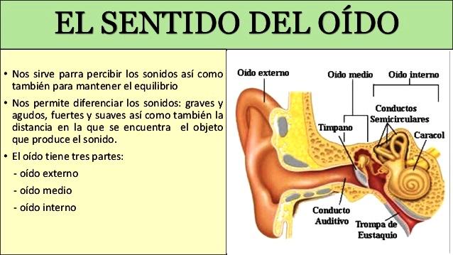 Para qué sirve el oído? - Cinco sentidos