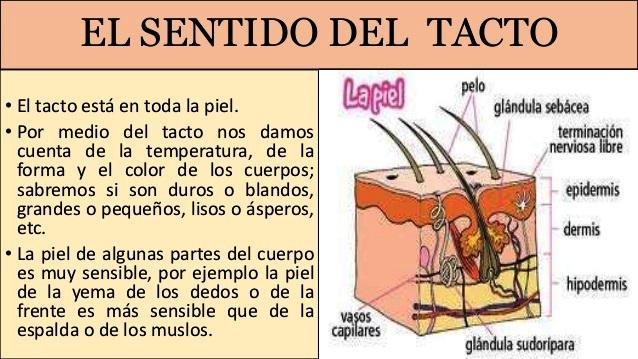 Para qu sirve el tacto cinco sentidos for El divan de los sentidos